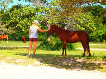 Friendly horses at Sunbay